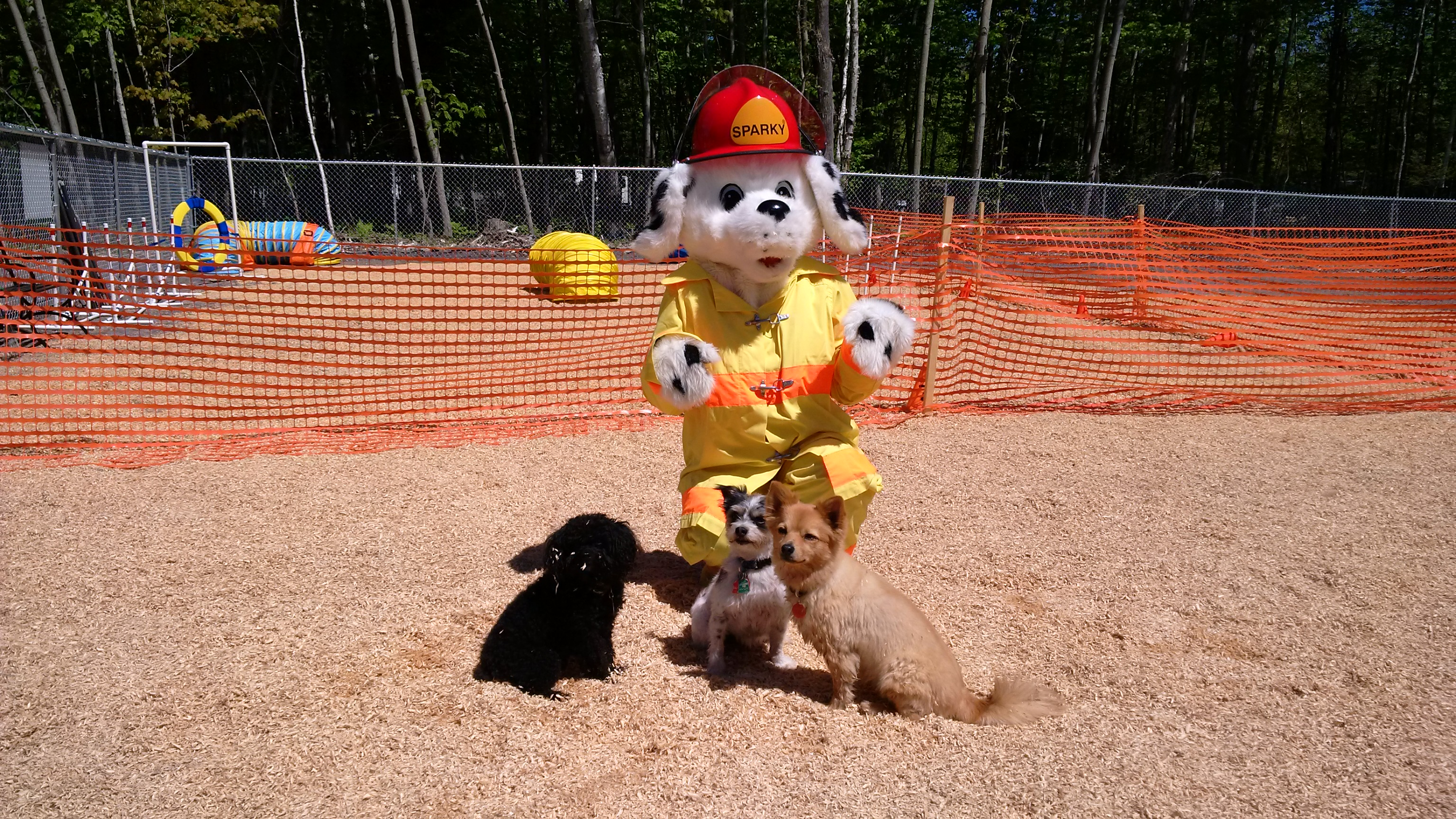 Picture of Sparky at the opening of North Bay's first Dog Park.